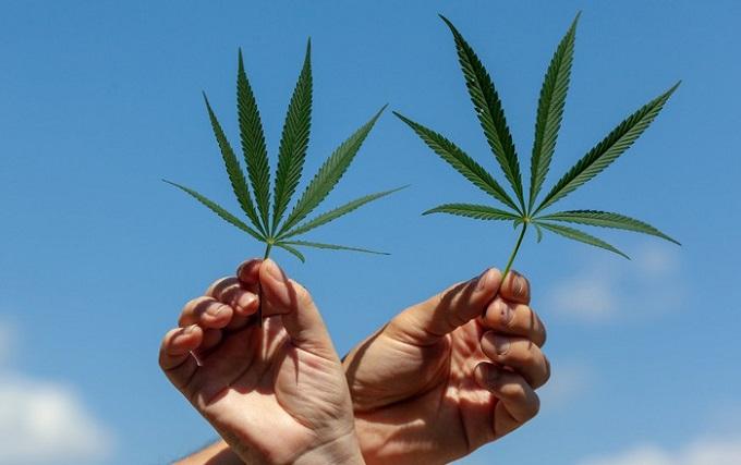 Anvisa libera derivados de Cannabis para uso medicinal