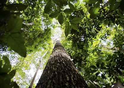Partidos pedem que União atue contra desmatamento da Amazônia